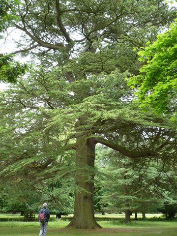 v hlásterní zahradě v Dryburghu 1