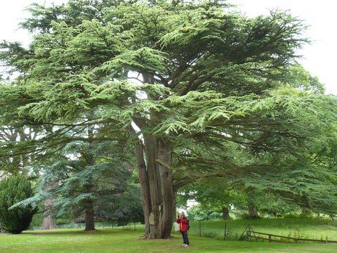 v klásterní zahradě v Dryburghu 2