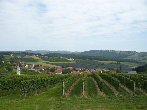 vinařská oblast
