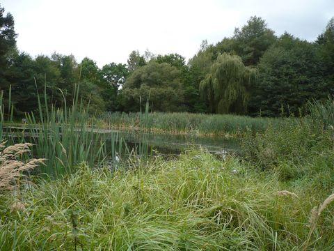 rybníky u Dolní Cerekve 1