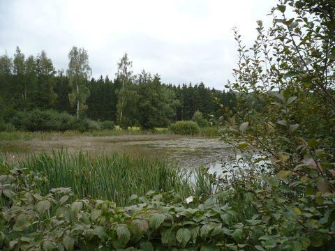 rybníky u Dolní Cerekve 2