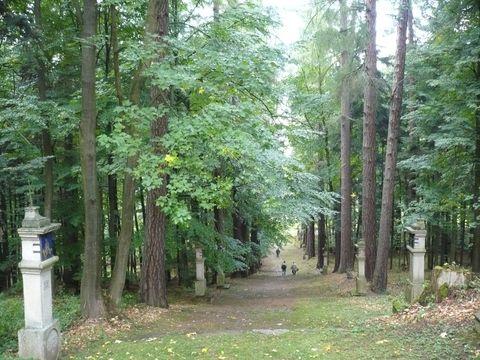 stromořadí s křízovou cestou na Bradlo