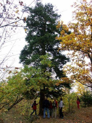 borovice u zříceniny hradu jistě pamatuje bouřlivé roky husitských válek