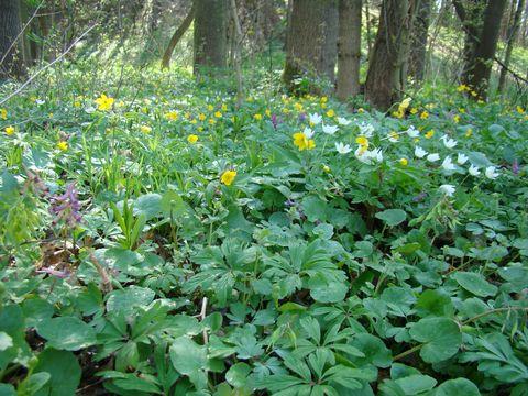 přírodní park Bobrava hýří barvami