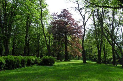 velmistr řádu stromů