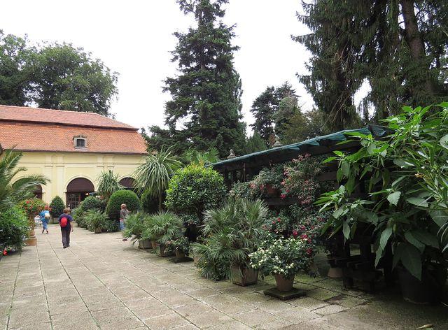 v zámeckém zahradnictví je největší sbírka druhů fuchsií u nás