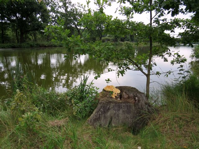 mělký rybník Vítek s rákosinami je rájem vodního ptactva
