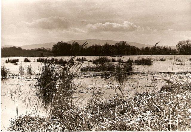 rybník Štilec