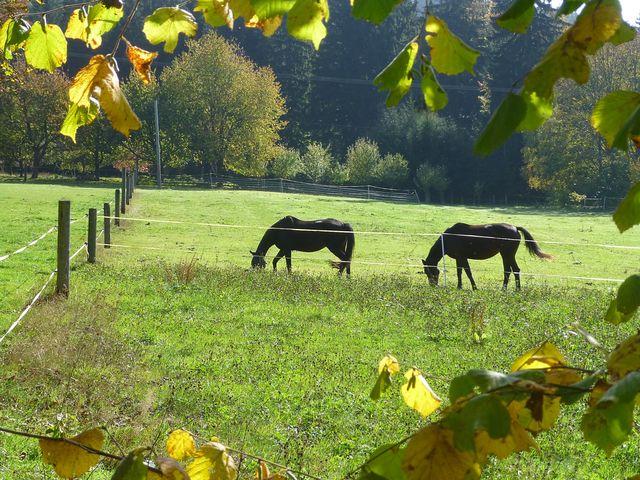romantika v přírodním parku Čeřínek - foto I. Nejedlá