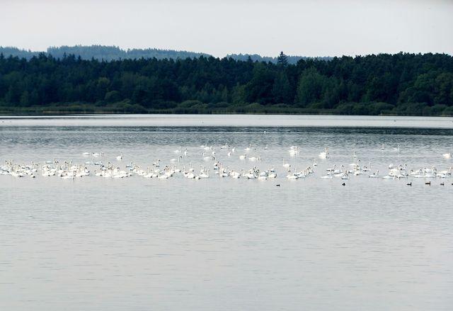 ráj vodních ptáků - foto I. Svobodová