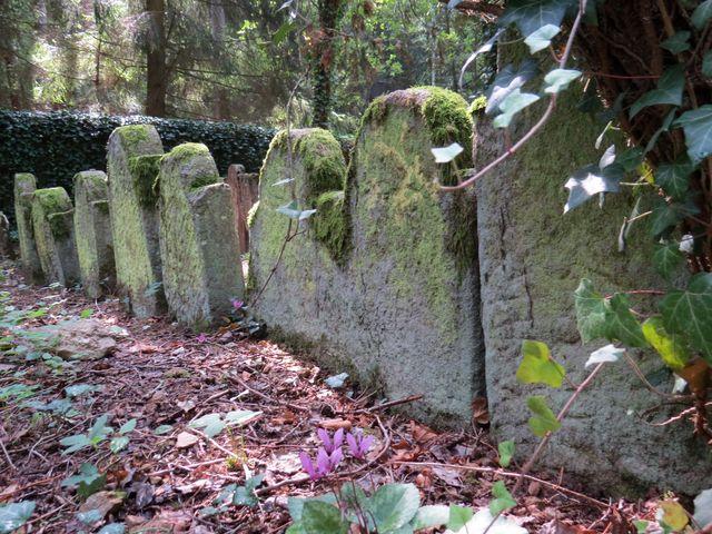 je vidět, že hřbitov prochází ozdravnými úpravami