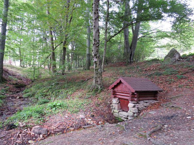 cesta krásnými bukovými lesy