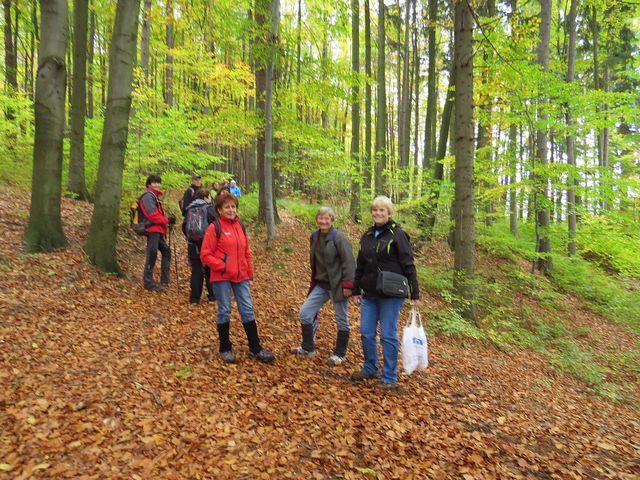 procházka přívětivými bukovými lesy