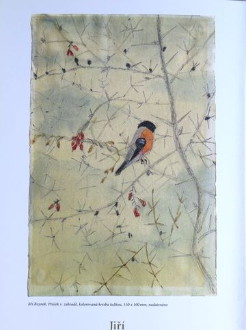 kolorovaná kresba tužkou Ptáček v zahradě - Jiří Reynek