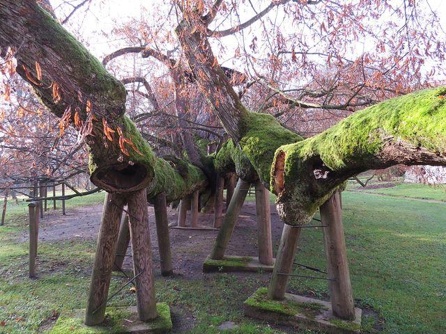 strom je pravidelně ošetřován
