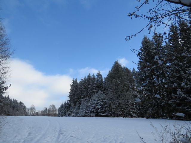 lesy u Lán; www.svatosi.cz
