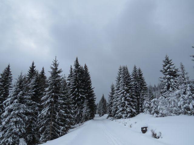 na Bavorské cestě