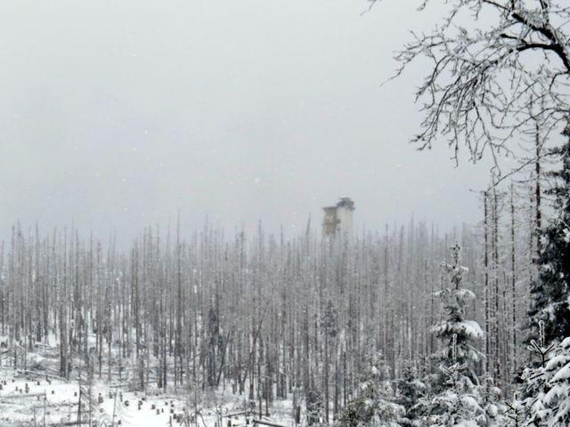 rozhledna na Poledníku - mlha, chumelenice, mrtvé stromy