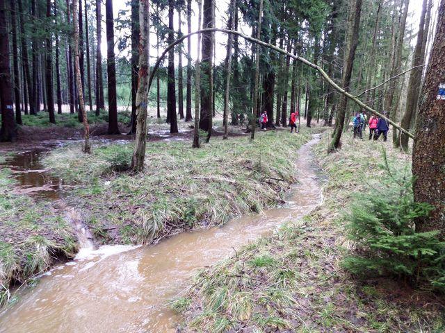 po deštích v munulých dnech byly lesy plné vody