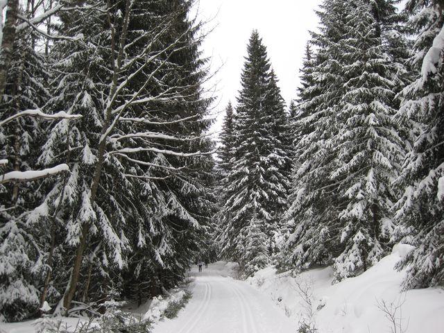 cestou do Prášil, u bývalého Formbergu