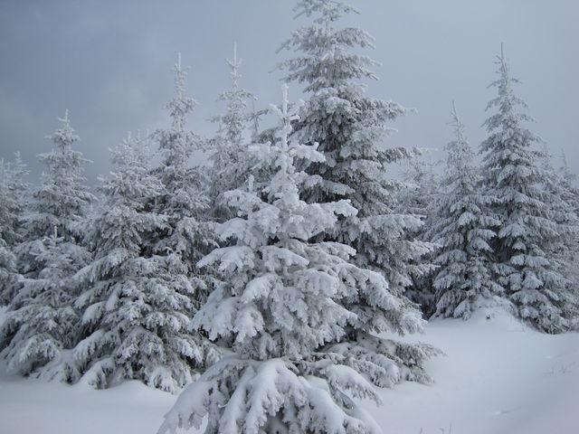 užíváme si opravdové zimy