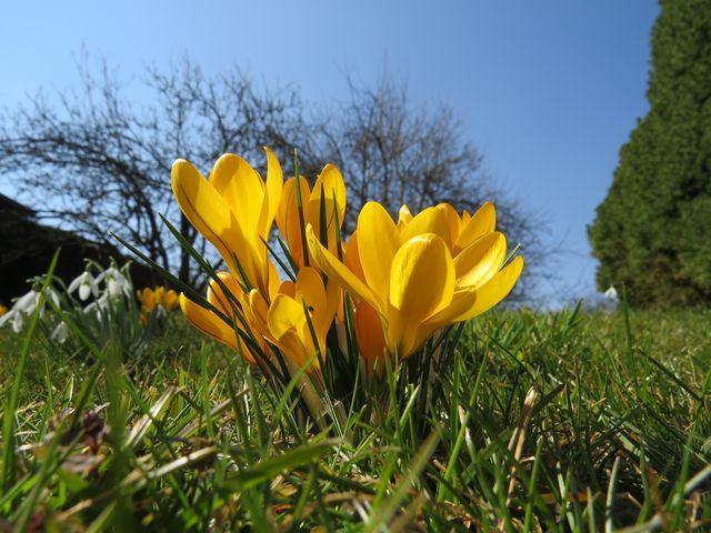 dychtivé očekávání jara; www.svatosi.cz