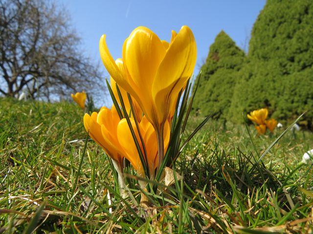 všem našim čtenářům přejeme krásné jaro; www.svatosi.cz