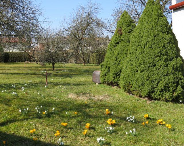 kytičky jdou naproti jaru