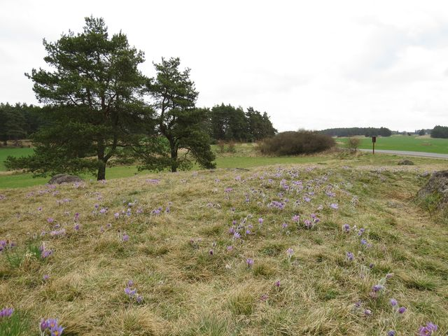 v okolí Trnavy je typická krajina s borovicovými lesy, trnitými keři a skalkami