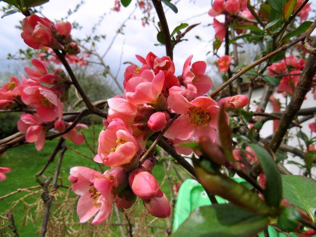 z květů jsme nadšení my i včely