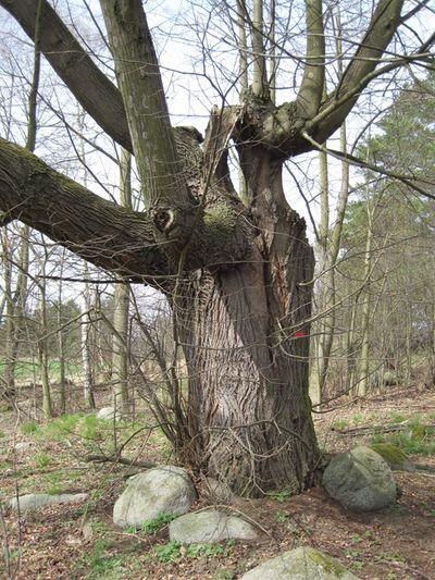 starý strom by jistě mohl vyprávět