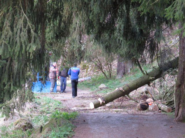 cyklostezka v kritickém úseku - právě dnes, v neděli, probíhala těžba dřeva; www.svatosi.cz