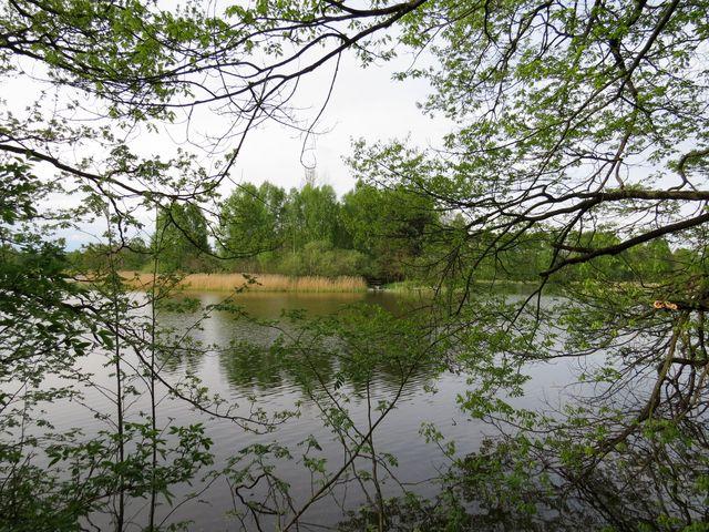 Purkrabský rybník u Chlumu u Třeboně