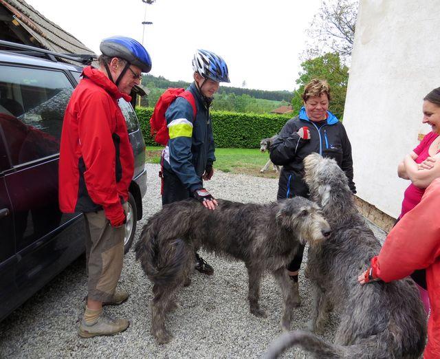 irský vlkodav je velmi přívětivý a prý trpělivý pes