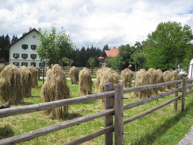 osada Wies je dodnes obklopena loukami