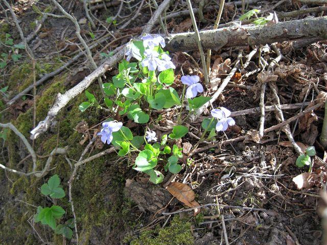 probuzená jarní příroda