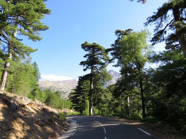 kvalitní silnice, nádherné borovicové lesy, sjezd pod horskými hřbety