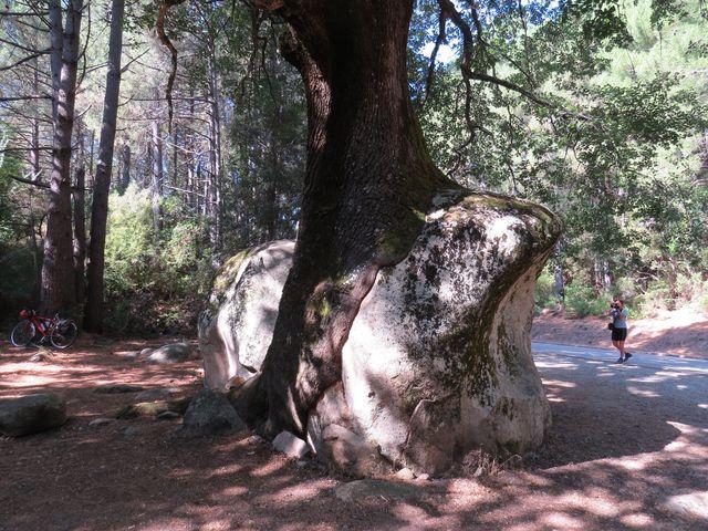 strom si dokázal uhájit své místo k životu