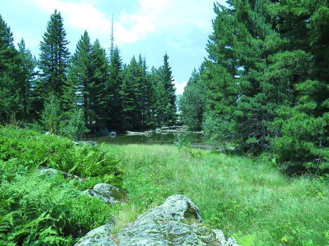 nezapomenutelné lesní kouty