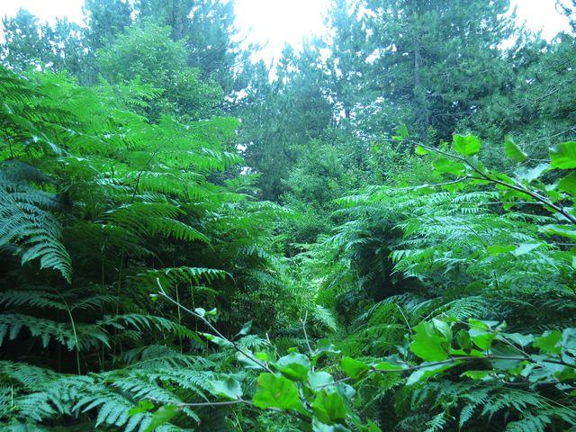 strmý svah porostlý houževnatou vegetací byl k nepřekonání