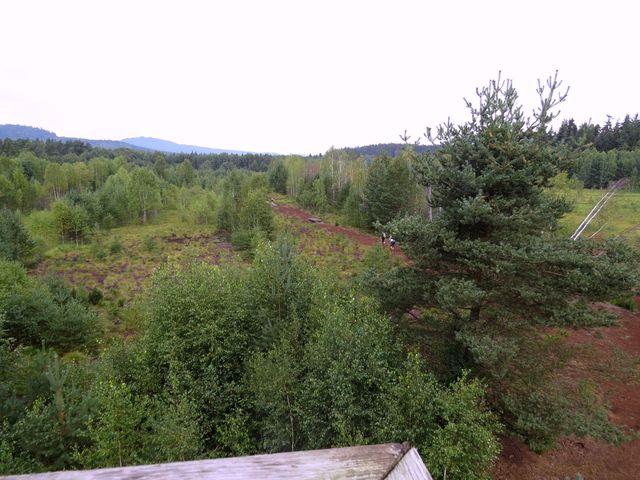výhled na rašeliniště z dřevěné rozhledny