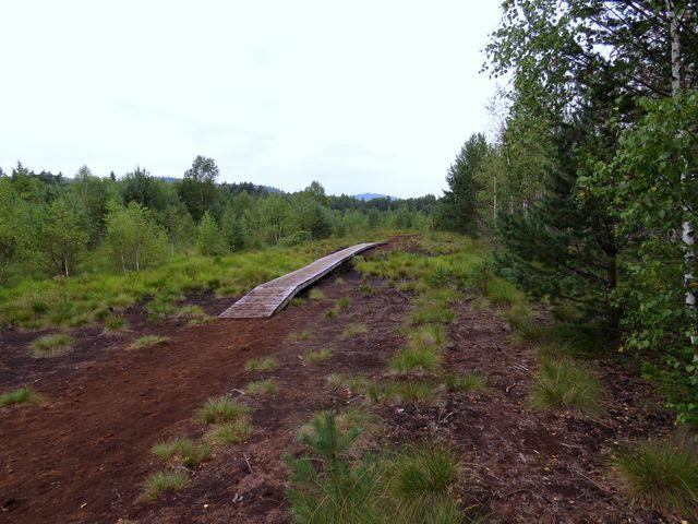 chodníky zavedou turisty na tajemná místa v rašeliništi