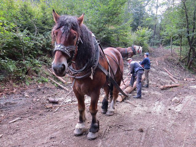lesní práce v této oblasti vykonávají velmi často Poláci
