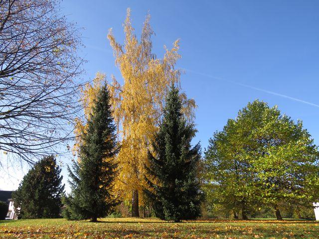 v parku o Dolního hřbitova