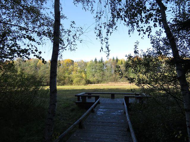 vyhlídkové molo u přírodní památky Louky u Černého lesa