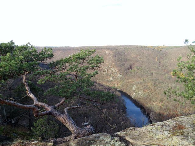 údolí Dyje ze Sealsfieldova kamene