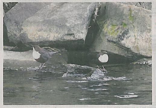 ovhranáři hledali, a našli skorce vodního; foto Tomáš Kněžíček