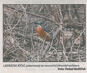 """krásný novoroční """"úlovek"""" ; foto Tomáš Kněžíček; tato a předchozí fotka jsou oskenovány z Jihlavských listů"""