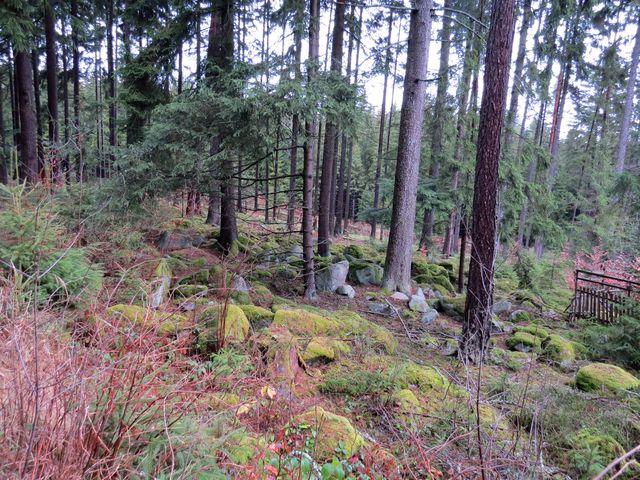 les na svahu masivu Čeřínku