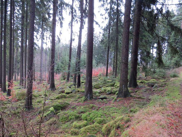 tak hezky je v lesích na Čeřínku; www.svatosi.cz